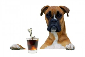 Boxer dog with dogtail cocktail