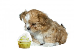 Cute puppy with a pupcake