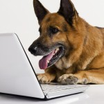 German Shepherd dog sends an email